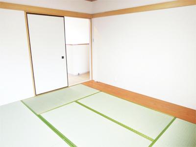 熊本県産い草 普及品